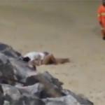 Casal é flagrado fazendo sexo na praia de Ponta Negra.