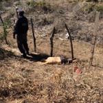 Homem é executado e jogado as margens da RN 118 próximo a Pendências.
